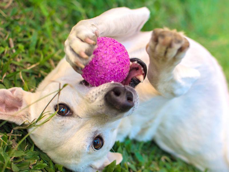 Игры с собакой помогают выплескивать энергию и налаживать дружбу