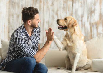 Советы по уходу за собакой
