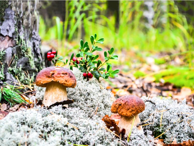грибы в Дымере