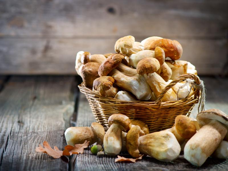 Самые лучшие места для сбора грибов в Киеве