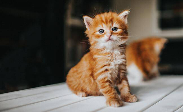Мале кошеня