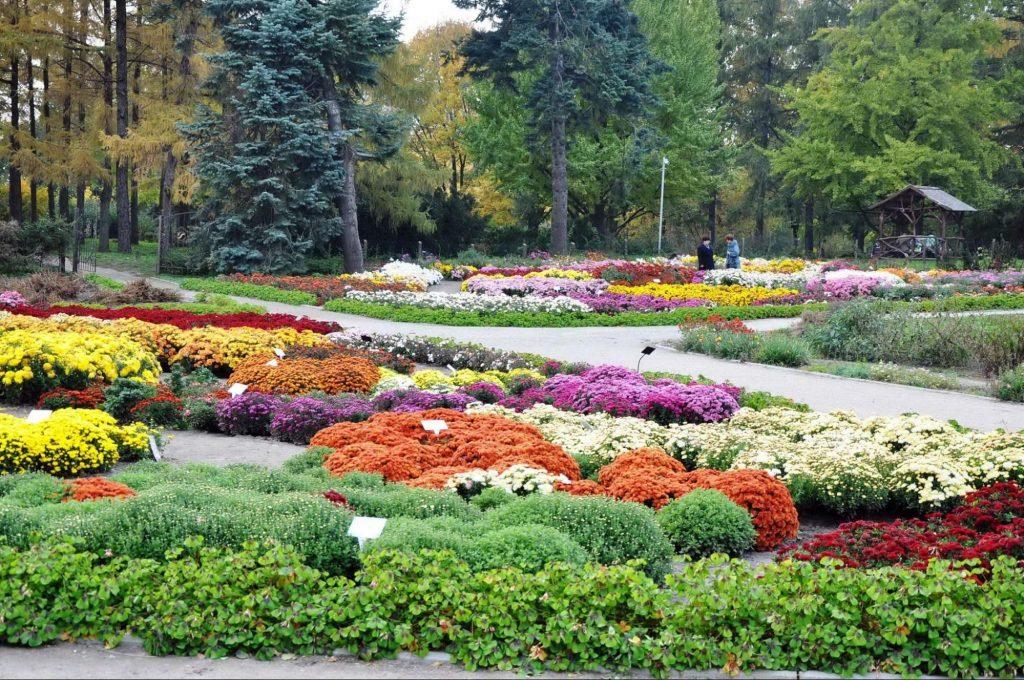 Цветочные клумбы в ботаническом саду Гришко