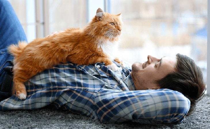 Рудий кіт із хазяїном