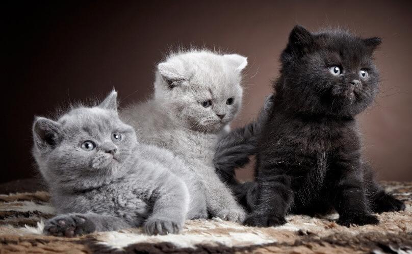 Пухнасті кошенята