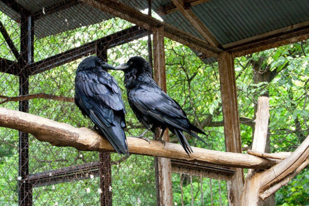 Два ворона на жерди