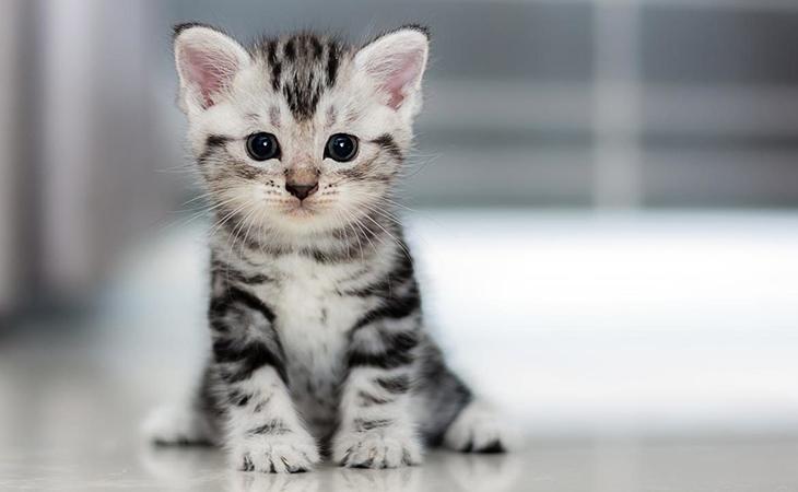 Прикольне кошеня