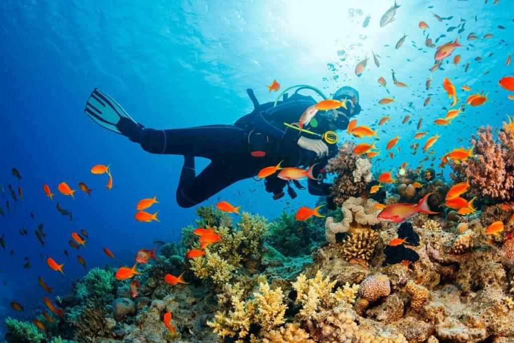На єгипетських курортах Червоного моря в листопаді можна активно насолоджуватися дайвінгом