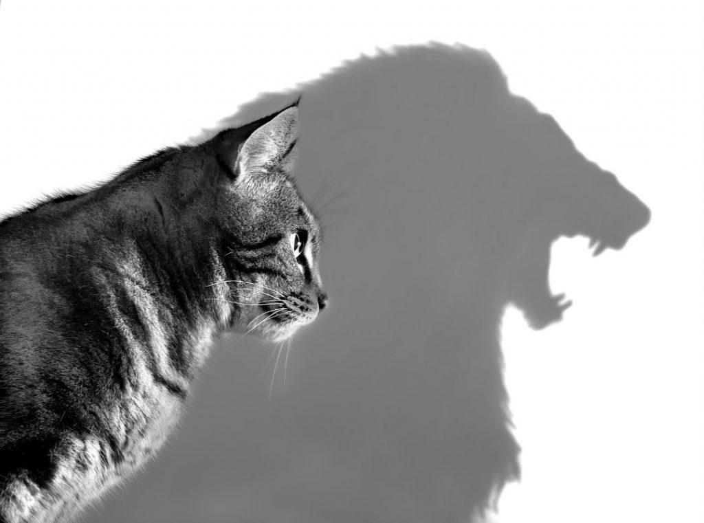 Хочешь найти хорошую работу по душе – будь львом в шкуре котенка :)