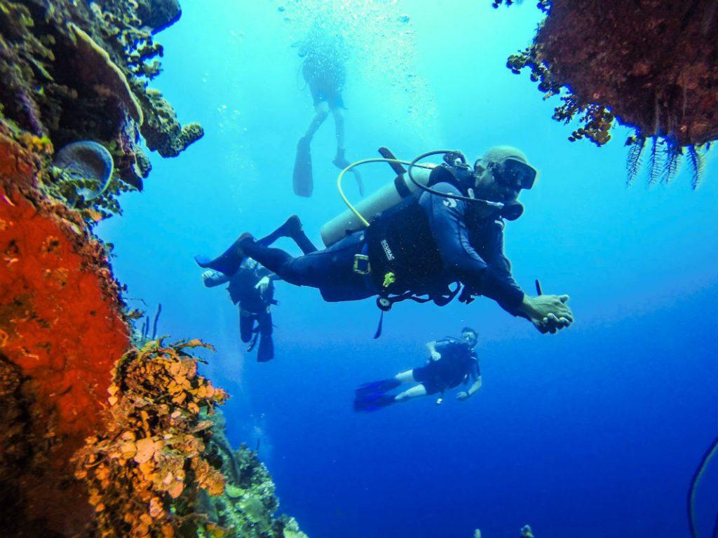 У острова Каталина много коралловых рифов, которые непременно стоит увидеть начинающим дайверам