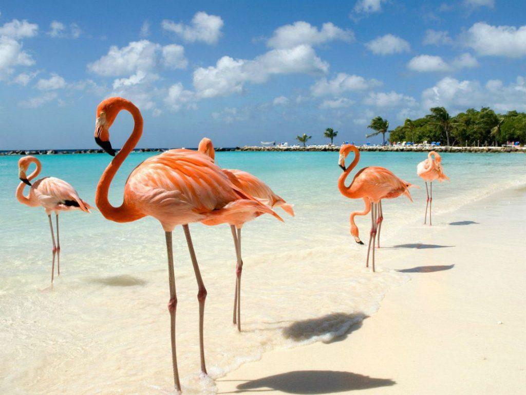 Кайо-Коко имеет статус государственного биосферного заповедника с огромным количеством редких птиц, в том числе фламинго