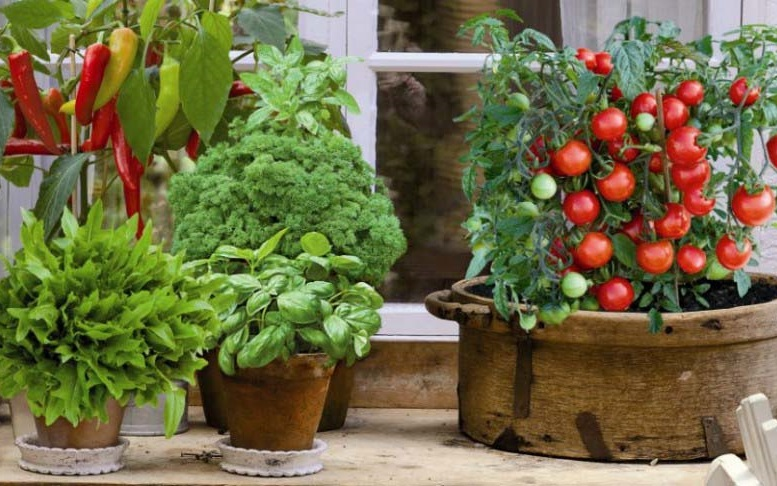 КАК И ЧТО МОЖНО ВЫРАСТИТЬ ДОМА НА ПОДОКОННИКЕ - огород в квартире