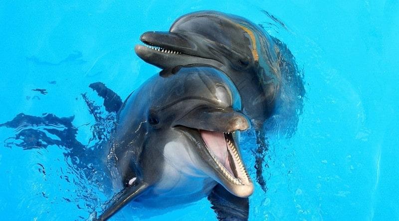 Романтическое шоу «LOVE» в дельфинарии «НЕМО»