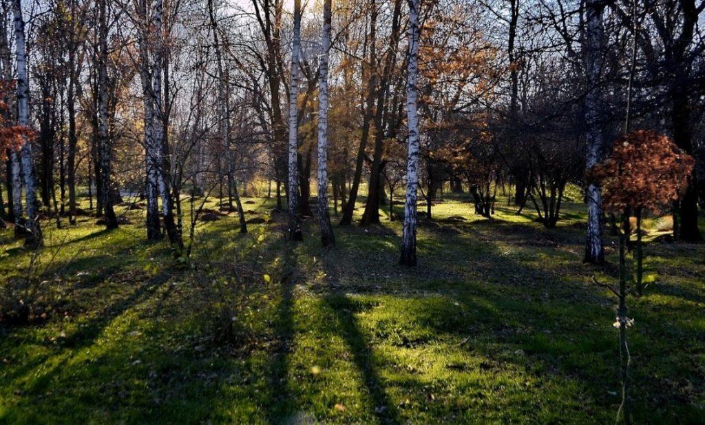 Парк «Березка»