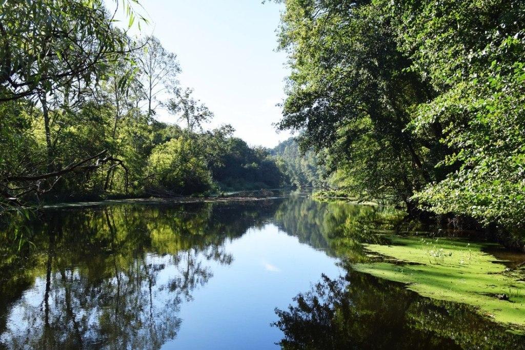 Гомільшанські ліси