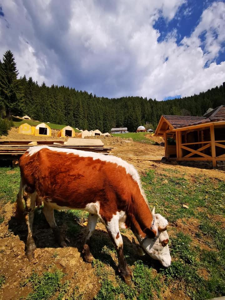 Корови вже пасуться на галявинці казкового містечка