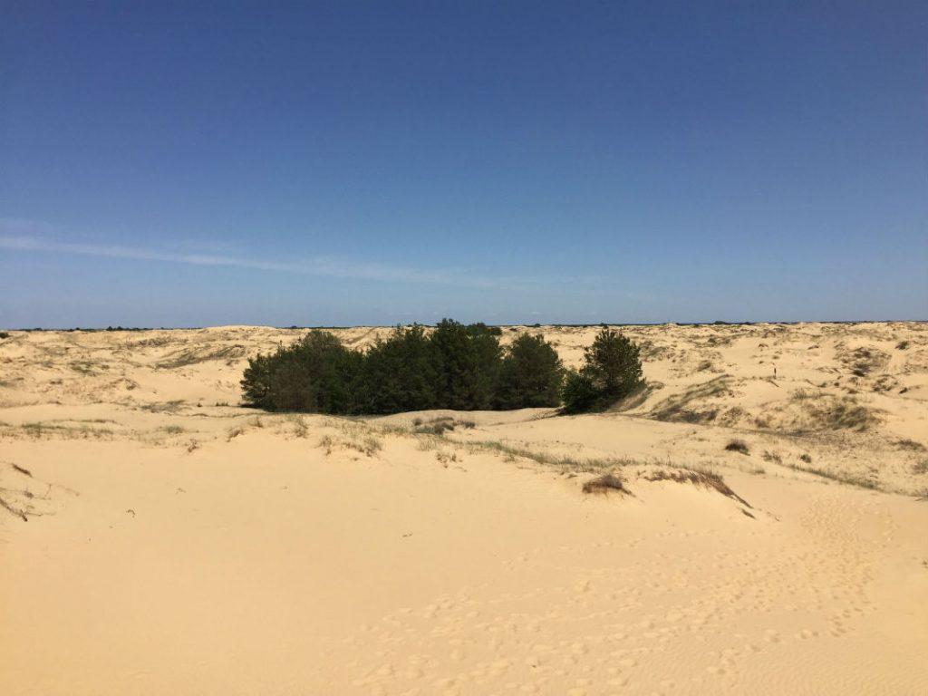 Олешківські піски – природне диво Херсонщини