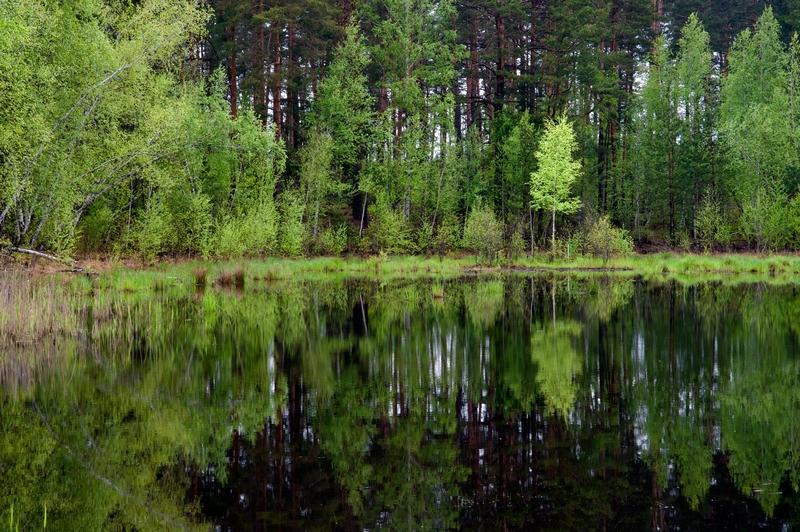 Природний парк Слобожанський