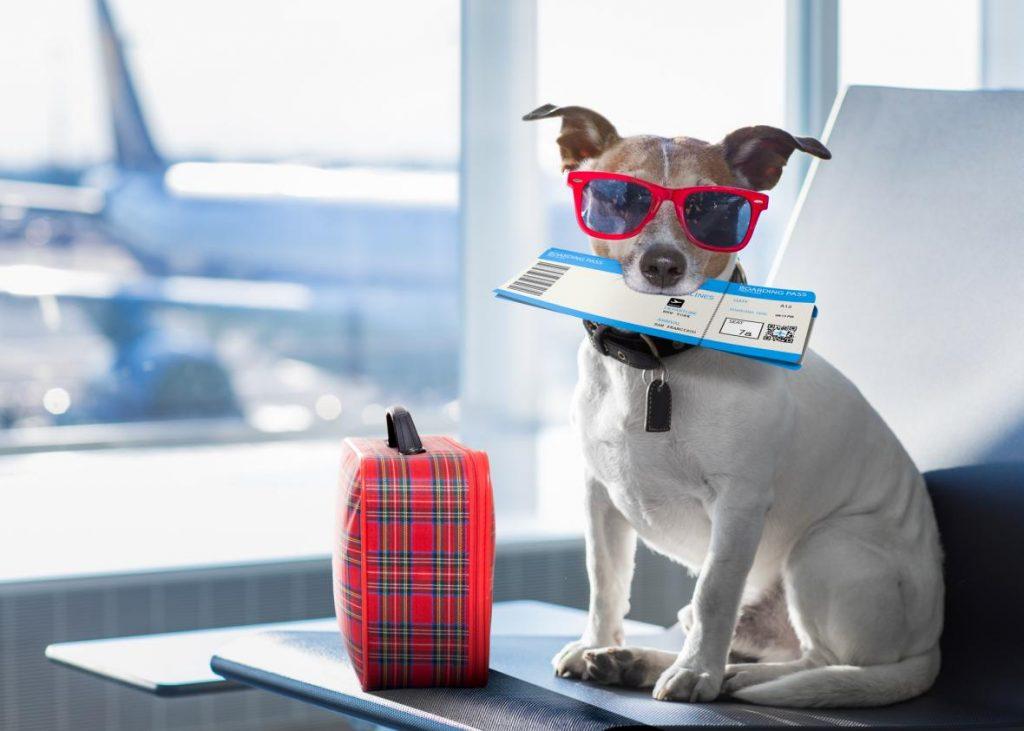Путешествия с животными всегда сопровождаются излишней бюрократией