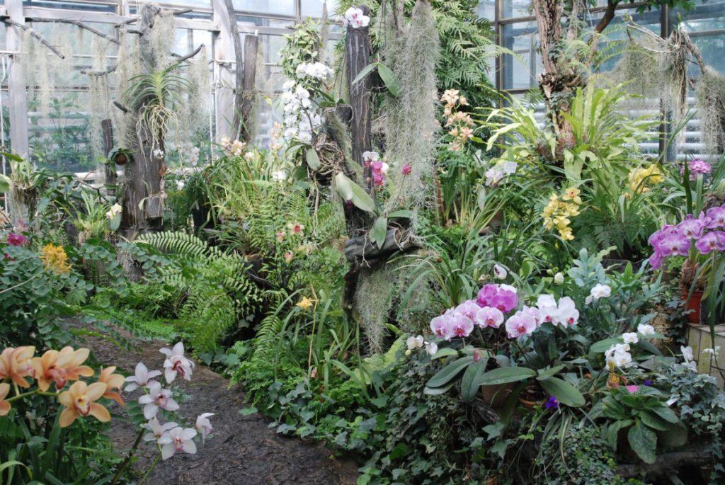 Выставка цветов «Эдемский сад»