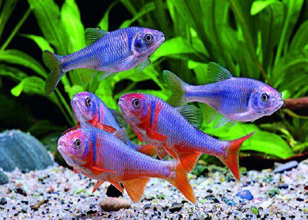 музей риб та плазунів
