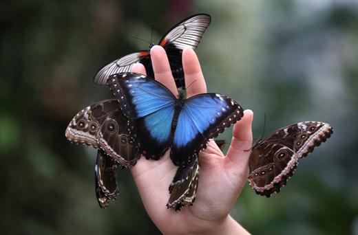 Спілкування з природою: виставка метеликів