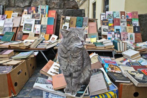 Книжный рынок букинистов богат не только книжками
