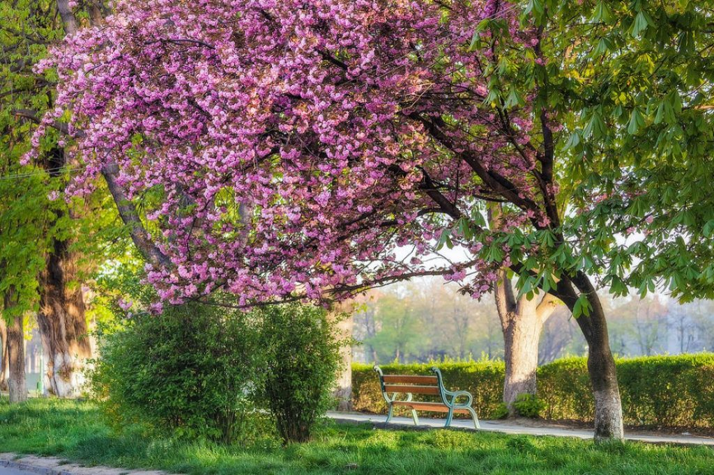 Цвітіння в Ужгородському ботанічному саду
