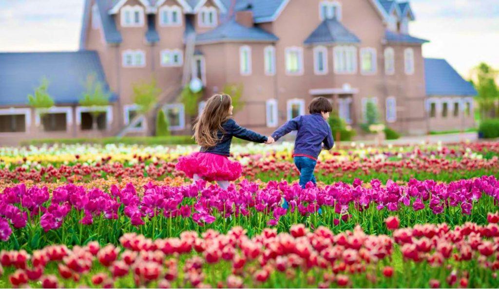 Поля тюльпанів в «Добропарку»