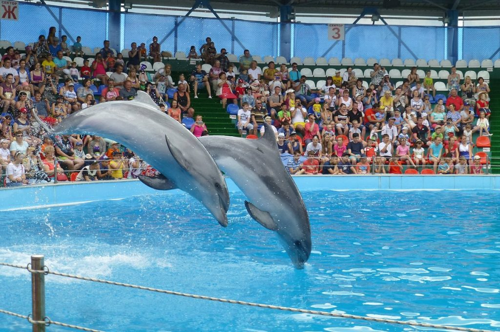Дельфінарій «Немо»