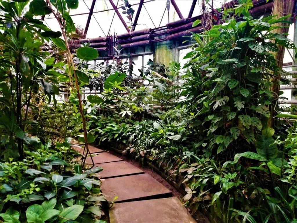 Оранжерея ботанічного саду ім. Фоміна