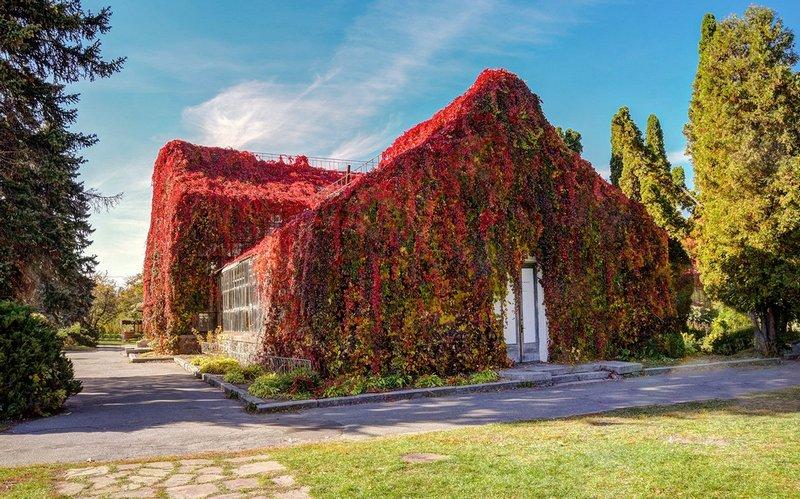 Оранжерея на ВДНГ – незвичайне місце для осінніх фото